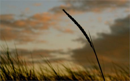 Sunset (652)