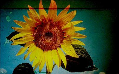 Grunge Sunflower (1090)