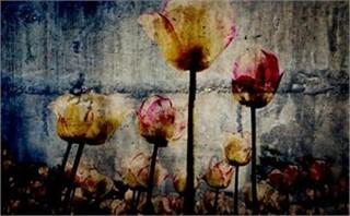 Flowers Slide