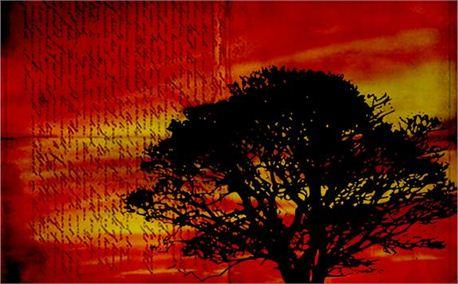 Tree slide (1095)