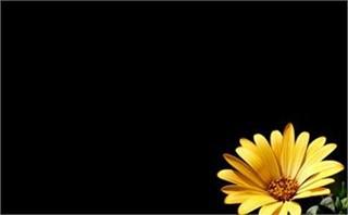 yellowmargeta