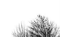 Live Like a Sparrow