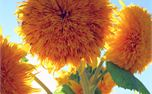 Bloom (10325)