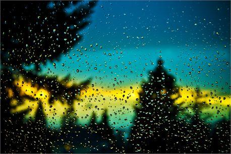 Window Drops (10426)