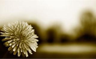 Tri-tone Flower