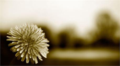 Tri-tone Flower (10574)