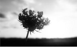 Black/White Flower Silhouette