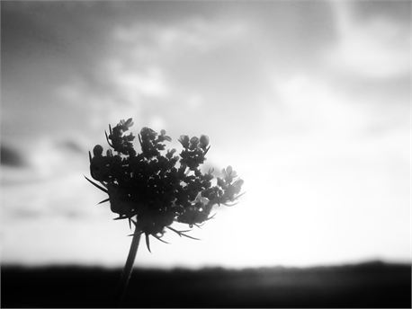 Black/White Flower Silhouette (10733)