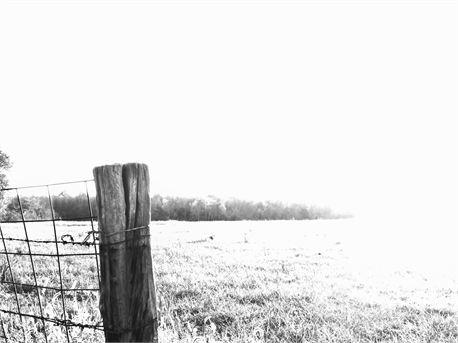 B/W Field & Fence Post (10734)