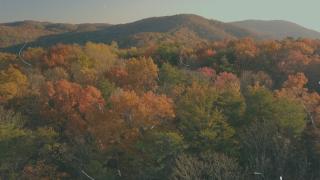 Autumn Film Background Loop