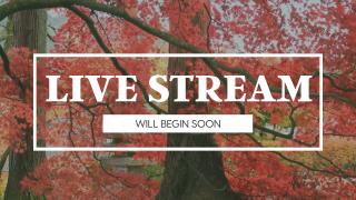 Fall Leaves Live Stream
