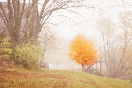 Fall / Autumn / Fog scene  (100348)