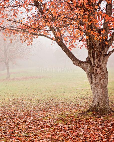 Fall / Autumn / Fog scene (100351)