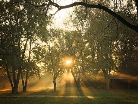 Early morning sunbeams (100352)