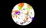 BC Background (100526)