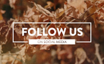 Autumn Leaves Social (100547)