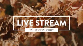 Autumn Leaves Live Stream