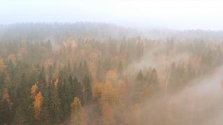 Fall Flight Background Loop