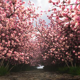Beautiful pink trees