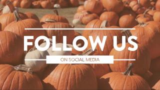 Pumpkin Film Social