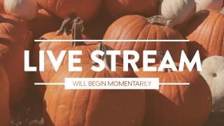 Pumpkin Film Live Stream