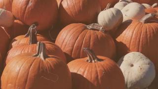 Pumpkin Film Background Loop