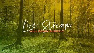 Forest Live Stream Slide