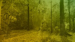 Forest Blank Motion Loop
