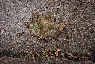Rainy day fall