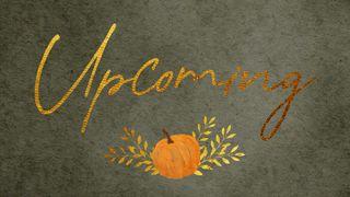 Harvest Pumpkin : Upcoming