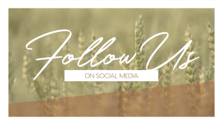 Wheat Harvest Social