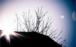 thorn hill