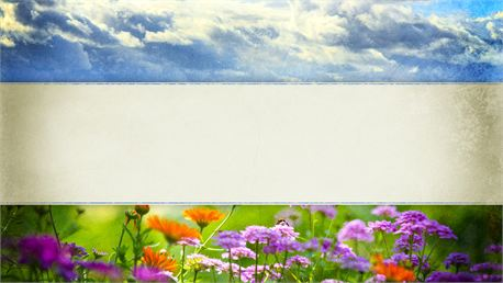 Spring Graphic- Blank (13321)