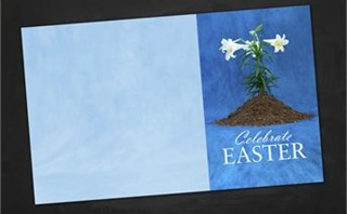 Easter Lily | Bulletins