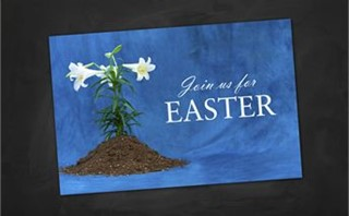 Easter Lily | Postcards