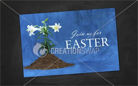Easter Lily | Postcards (13783)
