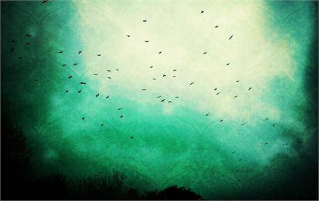 Birds in Dublin (14332)