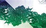 Distorted Forest Backgrounds (15205)