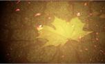 Autumn Leaf Worship Background (16273)