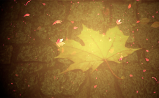 Autumn Leaf Worship Background