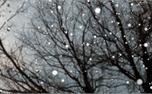 Christmas: Falling Snow (16513)
