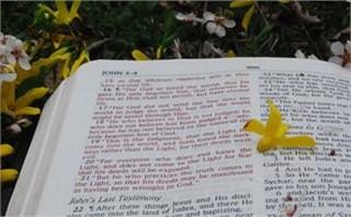 spring bible1