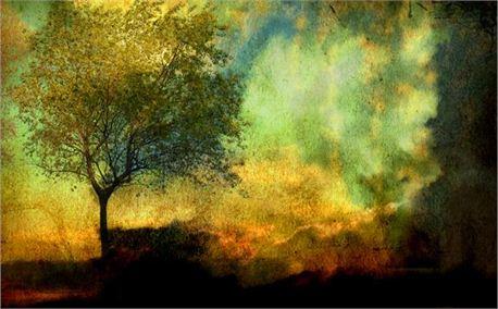 tree (2898)