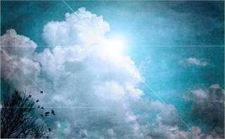 Sky and birds scene