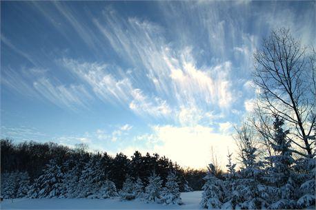 Winter Streaks (22124)