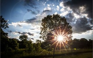 Sunset through trees