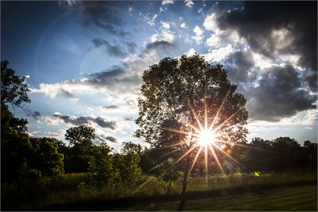 Sunset through trees (24813)