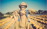 Scarecrow (25180)