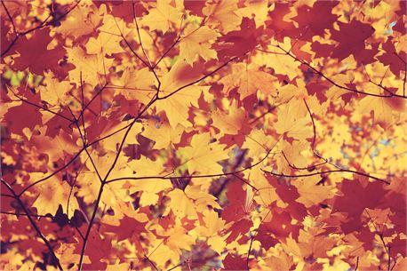 Vintage Autumn (25547)