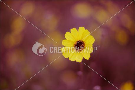 Spring (28735)